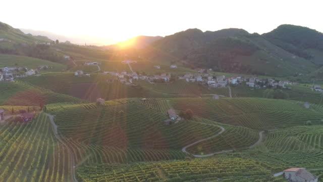 colline del prosecco in primavera - grape leaf stock videos & royalty-free footage