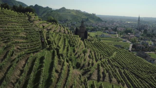 colline del prosecco - grape leaf stock videos & royalty-free footage