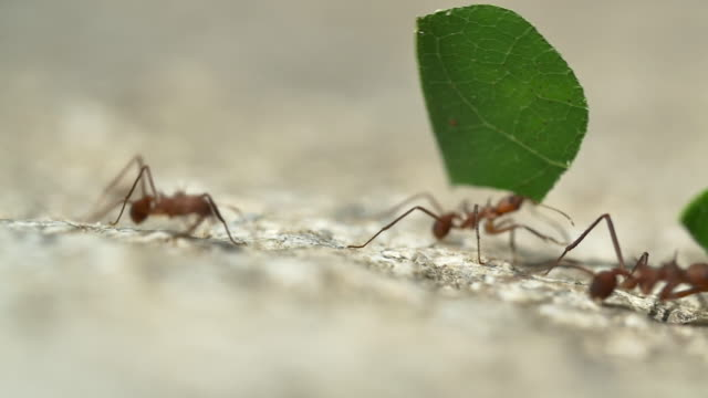 colombia ants - ant stock videos & royalty-free footage