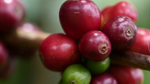 Colombia coffee beans in slow motion