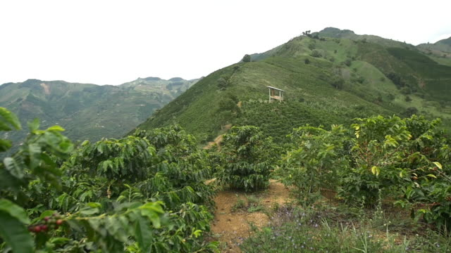 colombia coffee plantation - plantation stock videos & royalty-free footage