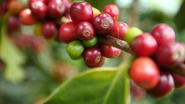 Colombia coffee slow motion