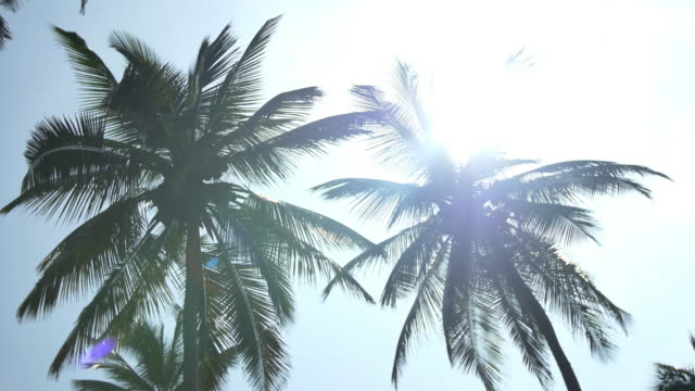 Colombia palmtrees with sun