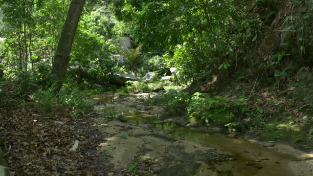 colombia river - tayrona national park stock videos and b-roll footage
