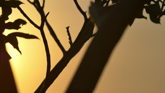 colombia sunset flare - tayrona national park stock videos and b-roll footage