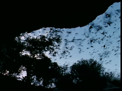 a colony of bats swarms out of a cave. - 洞窟点の映像素材/bロール