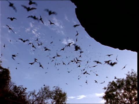 vidéos et rushes de a colony of bats swarms outside a cave. - colony