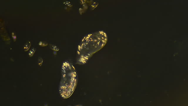 vídeos de stock e filmes b-roll de colony of ciliates microorganisms floating in water - microbiologia