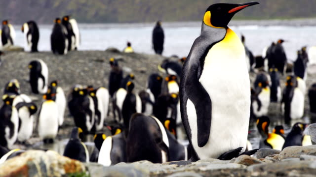 colony of emperor penguins - south pole stock videos and b-roll footage