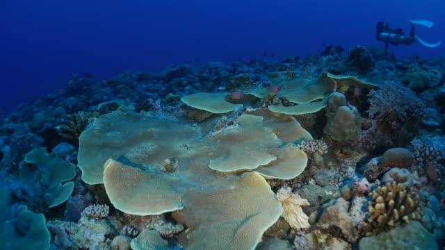colony of hard coral undersea - undersea stock videos & royalty-free footage