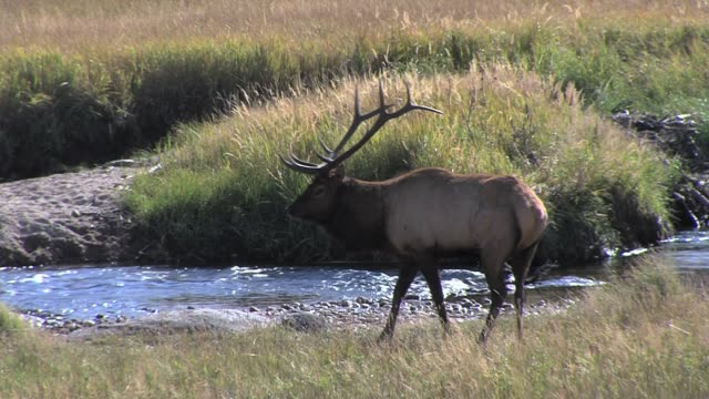 colorado's rocky mountain national park during the mating season for the parks elk also includes fall colors in the park and the high mountain peaks... - herbst stock videos & royalty-free footage