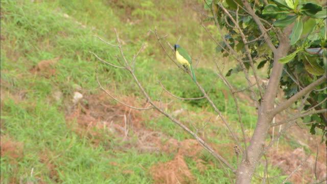 ms colorefull bird sitting on tree and flying away / venezuela - 動物の色点の映像素材/bロール