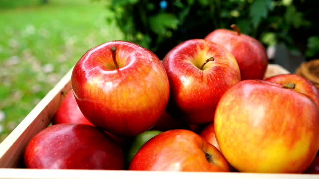 colorful apples in box