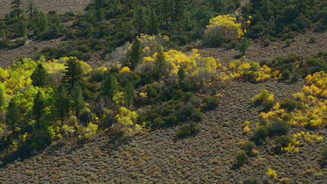 colorful aspen trees in sierra nevadas - californian sierra nevada stock videos and b-roll footage