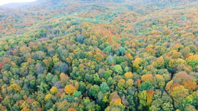 aerial: colorful autumn forest on clear sunny day - multicopter stock videos & royalty-free footage