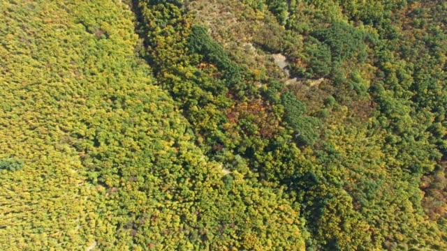 Antenne: Bunten Herbstwald auf Hügeln, Ansicht von oben