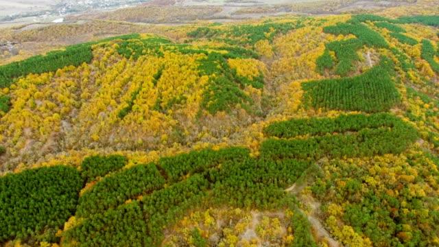 航空写真: カラフルな秋の森の丘の上 - クワッドコプター点の映像素材/bロール