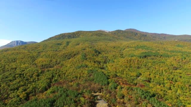 AERIAL: Colorful autumn forest on hills