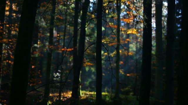 vídeos de stock, filmes e b-roll de hd colorida floresta de outono (em movimento - floresta da bavária