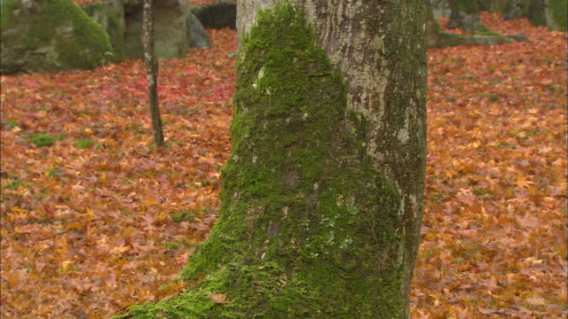 Colorful autumn leaves cover the ground around a mossy tree.