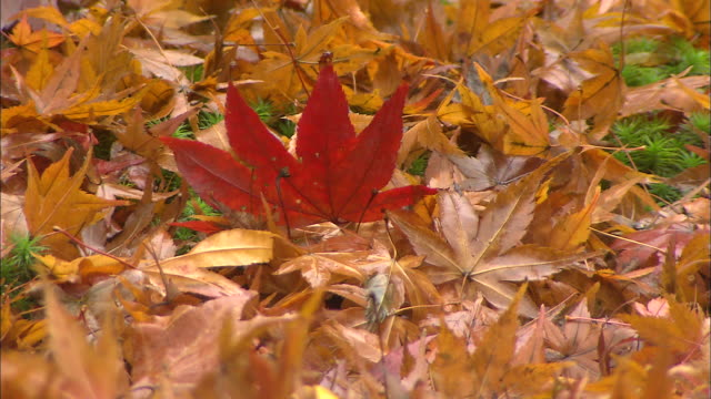 Colorful autumn leaves cover the ground.