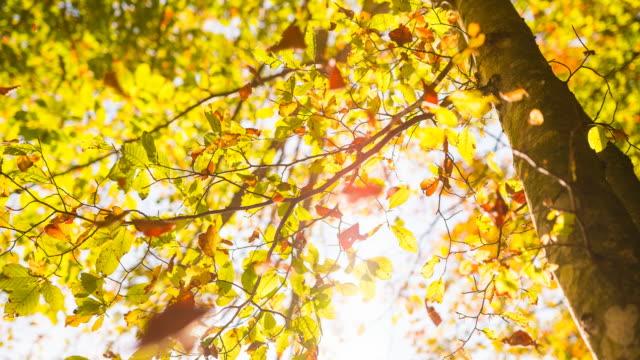 秋には木から落ちる紅葉します。