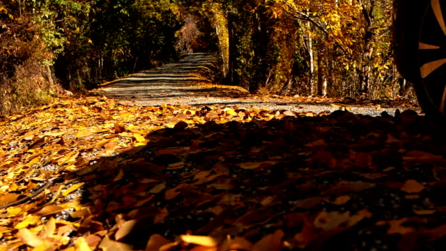 slow motion close up: colorful autumn leaves flying behind a car driving over - 4x4 video stock e b–roll