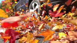 SLOW MOTION CLOSE UP: Colorful autumn leaves flying behind a car driving over