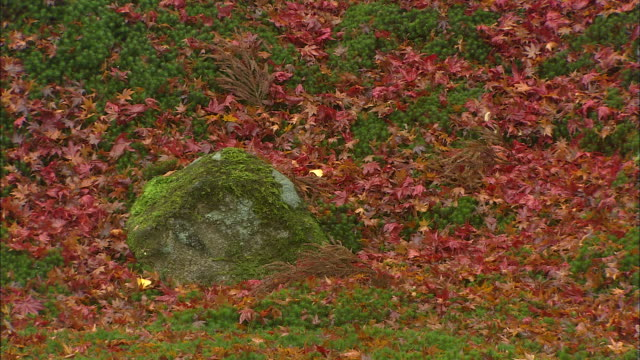 Colorful autumn leaves partially cover small green shrubs.