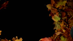 Colorful autumn leaves. Transition, reveal the background. 3 different versions.