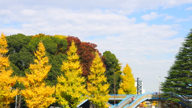 colorful autumn leaves trees stand and surround the elevated pedestrian bridge under the autumn clouds at harajuku district shibuya tokyo japan on november 29 2017. people walk on the bridge. - treelined stock videos & royalty-free footage