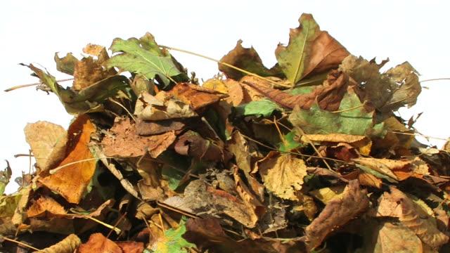 Farbenprächtige Herbstblätter