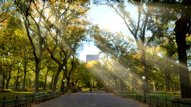 colorful autumn park trees at sunrise light. central park in fall season new york city - central park manhattan video stock e b–roll