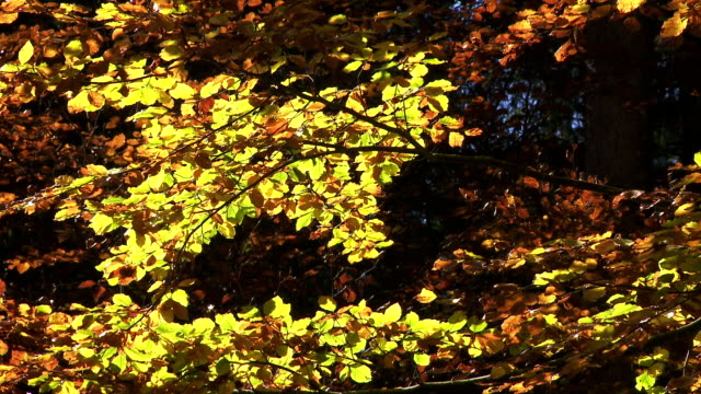 colorful autumn tree in the sunlight - branch plant part stock videos & royalty-free footage