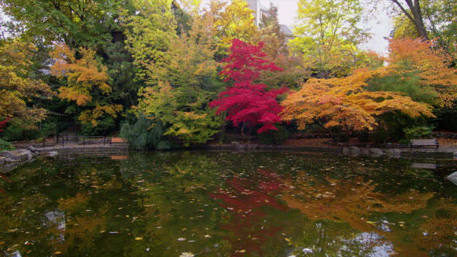 Colorful autumn trees line a pond and Japanese gardens in Lithia Park, Oregon.
