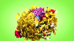 Colorful big flowers background in 4K