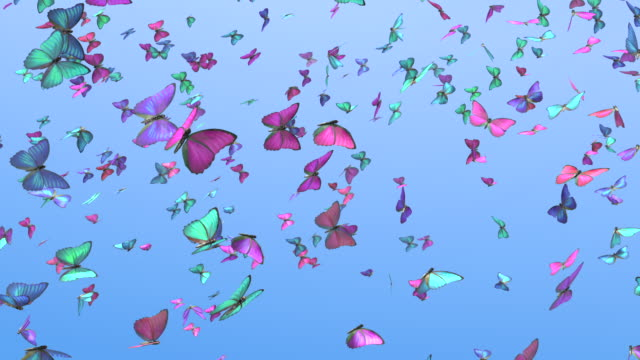 WS Colorful butterflies flock flying around
