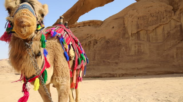 colorful camel in the wadi rum with natural arch in stunning landscape. - jordan middle east stock videos and b-roll footage