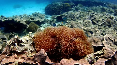 vídeos de stock e filmes b-roll de colorful coral and anemone - coral macio