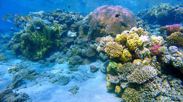 colorful coral reef - underwater sealife on red sea - seabed stock videos & royalty-free footage