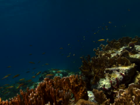 colorful coral reef - anna maria island stock videos and b-roll footage