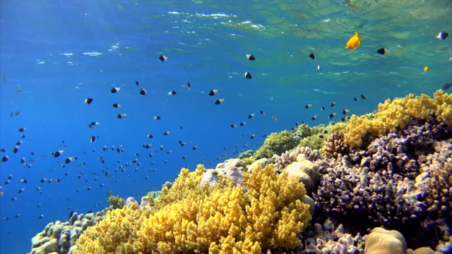 Colorful Coral reef with lot of fisch on Red Sea