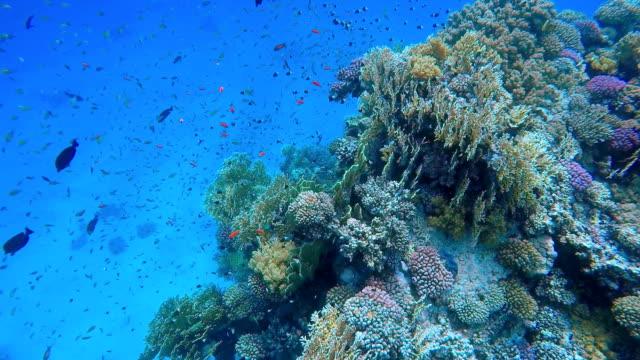 Bunte Korallenriff mit viel Fisch auf Marsa Alam
