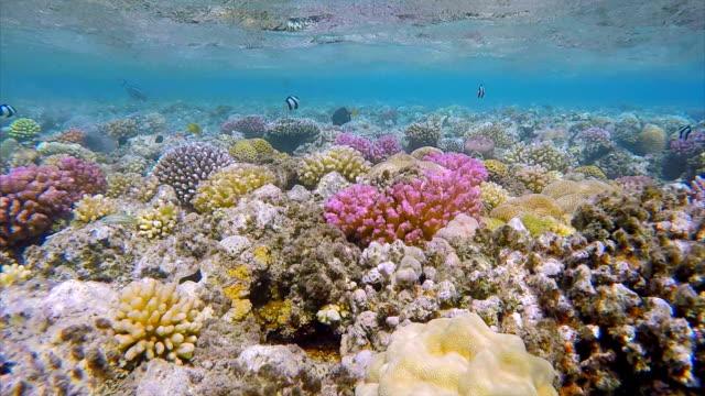 Barrière de corail coloré avec beaucoup de poissons de mer rouge
