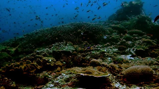 vídeos de stock e filmes b-roll de coral colorido - coral macio