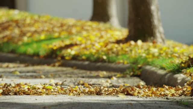 vídeos de stock, filmes e b-roll de colorful, fallen, autumn leaves are blown down the sidewalk with a leaf blower in slow motion. - calçada