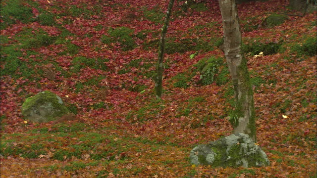 Colorful fallen leaves cover a hillside in autumn.\n