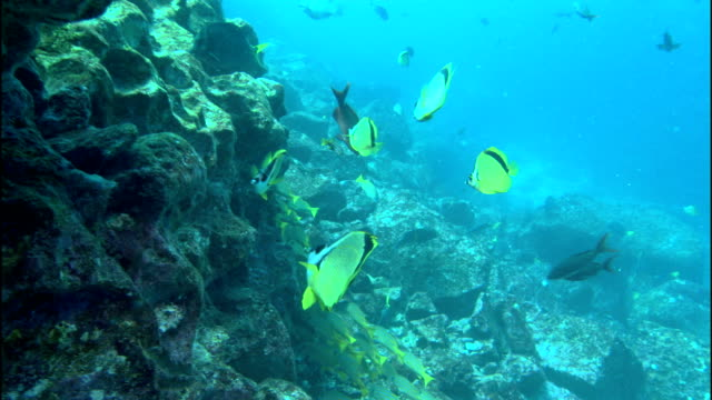 colorful fish forage on corals. - tropischer fisch stock-videos und b-roll-filmmaterial