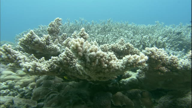 Colorful fish hide among corals around the Bonin Island.