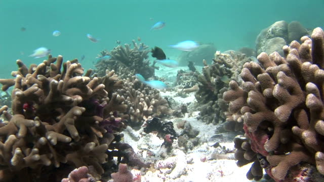 stockvideo's en b-roll-footage met colorful fish swim among corals on the bed of jellyfish lake. available in hd. - ongewerveld dier